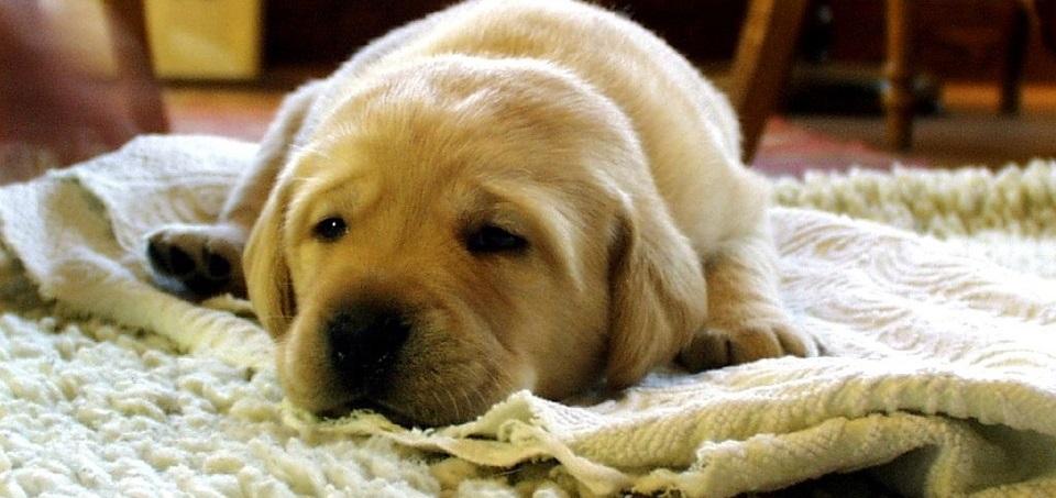 Limpieza de alfombras en villalba limpieza de alfombras - Productos para limpieza de alfombras ...