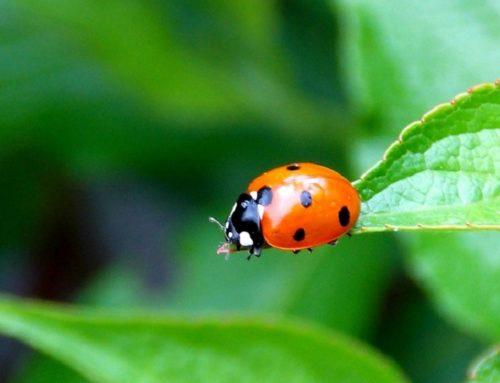 Servicio de jardinería en Las Rozas, Majadahonda y alrededores