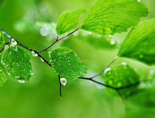 Alfombralimpia protege el medio ambiente